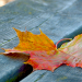 Styrelsekunskap grund 9 oktober